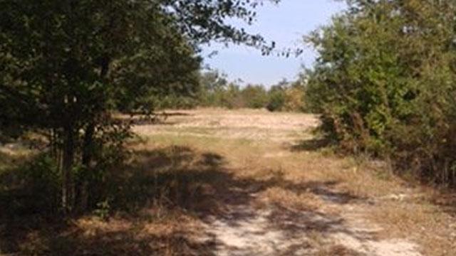timberland for sale alabama