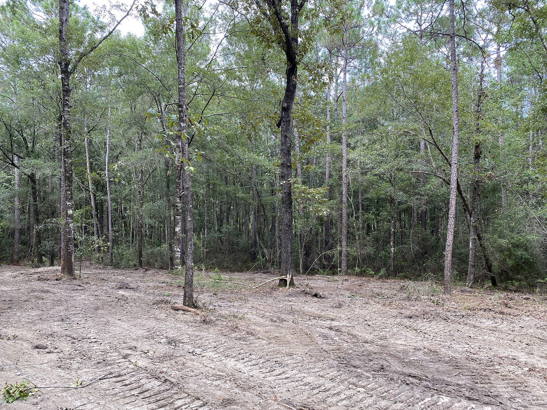 hollingsworth-rd-tract-baldwin-county-land-for-sale